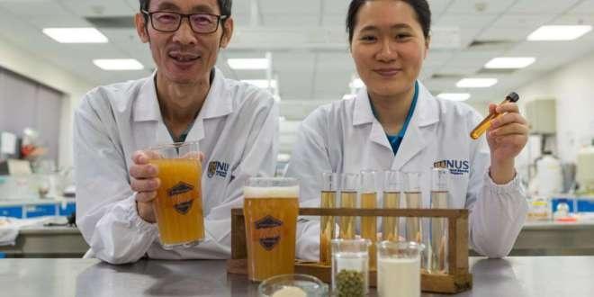 Araştırmacılar Dünyanın İlk Probiyotik Birasını Ürettiler.