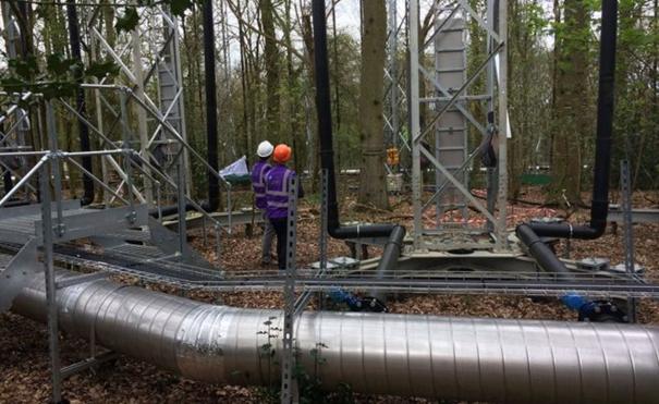 Bilimkurgu Ormanı Karbon Salınımı Etkisini İzliyor. İ
