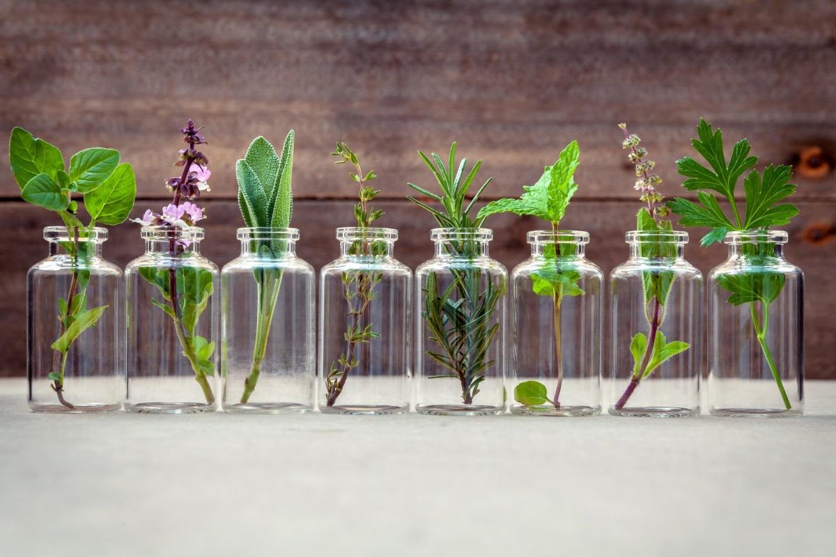 Kozmetik Bitkileri için Ücretsiz Araziler