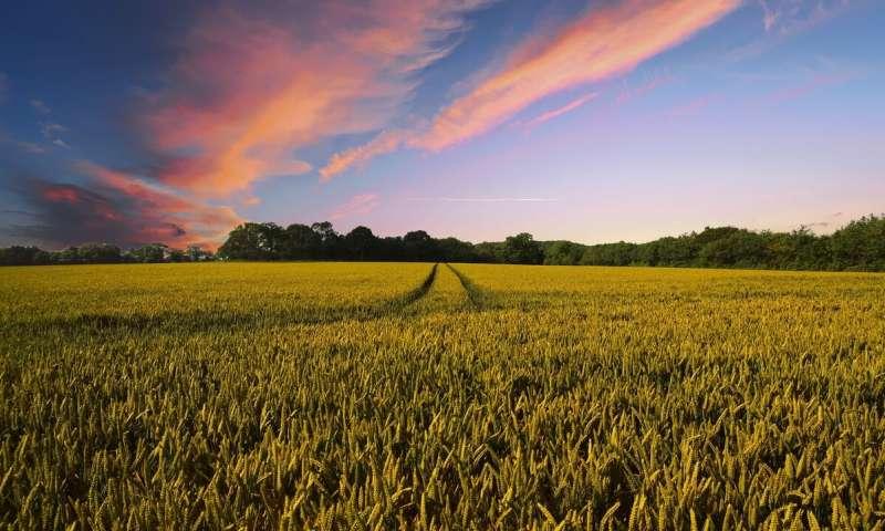 Küresel Tarım: Biyoçeşitlilik için tehdit mi ?