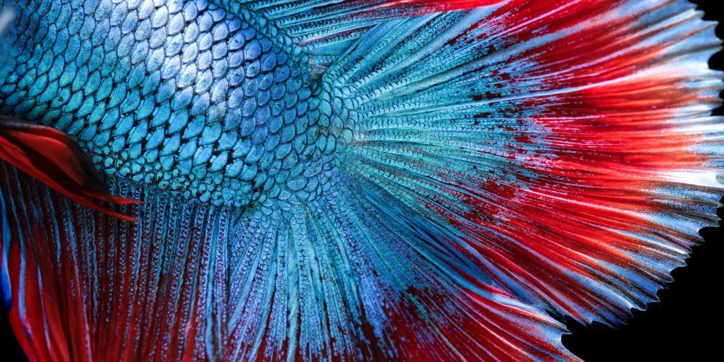 Renk Değiştirebilen Grafen, Yapılardaki Gizli Hasarları Ortaya Çıkarabilir