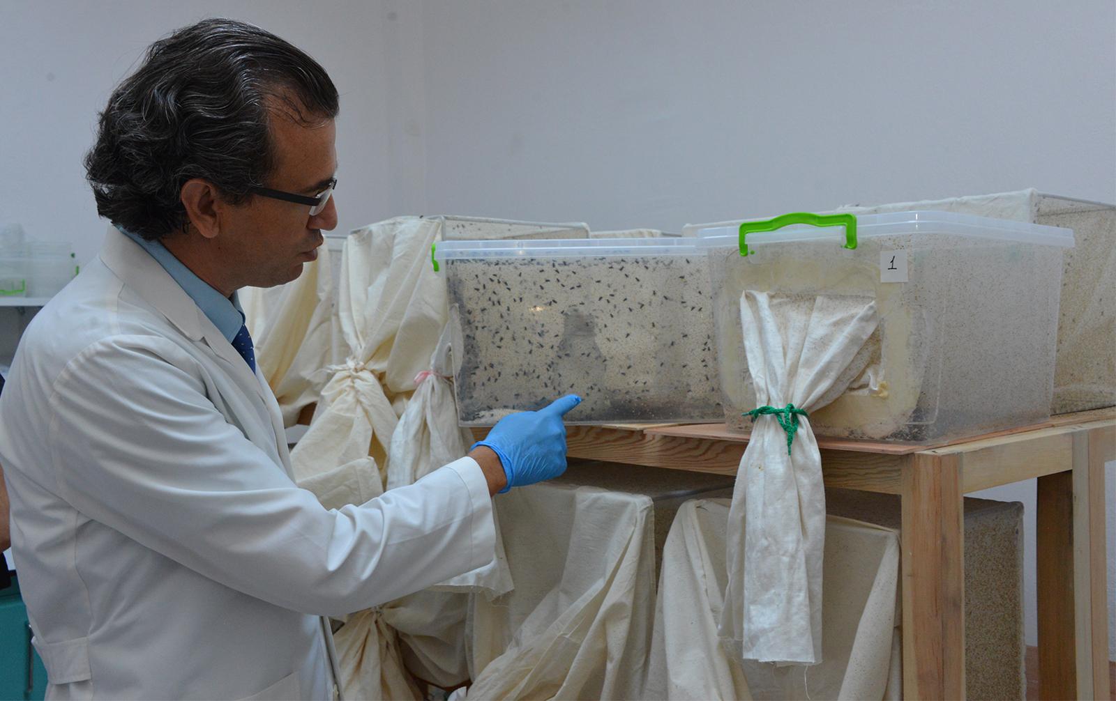 Selçuk Üniversitesinde Derin Yaralar, Larvalarla Tedavi Ediliyor